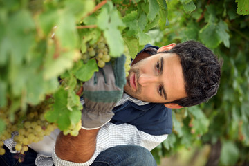 close-up of a wine-grower