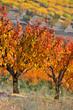 champ d'arbre fruitier aux couleurs d'automne