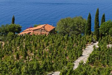 Weingut in der Toskana, Insel Elba