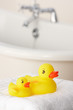 Rubber ducks in bathroom