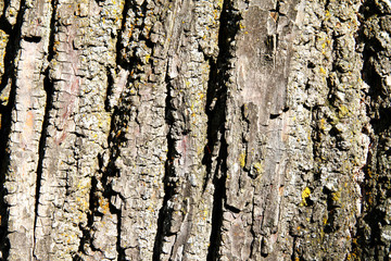 Baum Rinde Hintergrund
