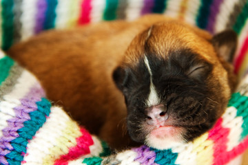 Newborn puppy sleeping