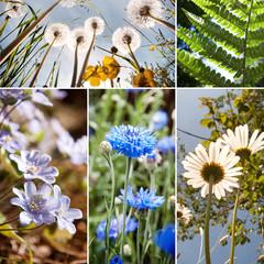Flowers collage - Fiori di campo collage