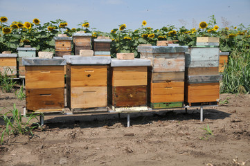 Multi-Colored Langstroth Bee Hives