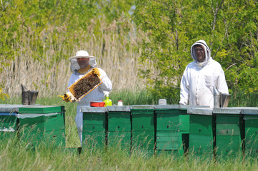 The beekeeper in the field