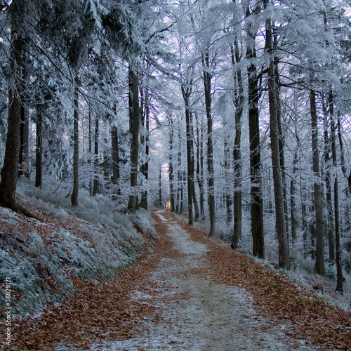 Fototapeten,wald,frost,gefroren,eis