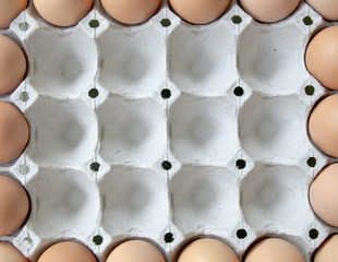 the carton frame eggs