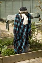 Scarecrow in a herb garden