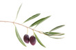 Ramo con due olive
