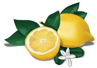 Limone con fiore