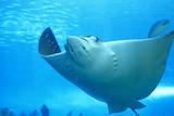 Fototapeta australia - tło - Ryba