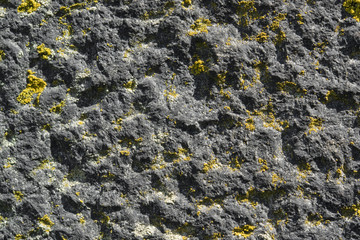 lichen on rough stone