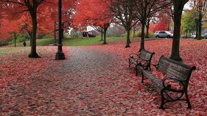 Tom McCall Waterfront Park Portland Oregon Colorful Fall Season