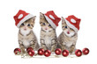 Drei Kätzchen Weihnachten