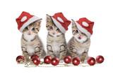 Fototapety Drei Kätzchen Weihnachten