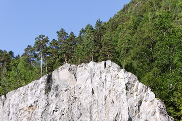 Pines on cliff.