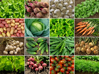 organic vegetables and greens collage