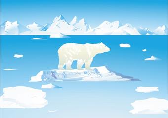 Eisbär und Eisbären