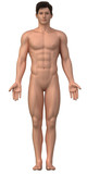 Naked man in anatomical position isolated poster