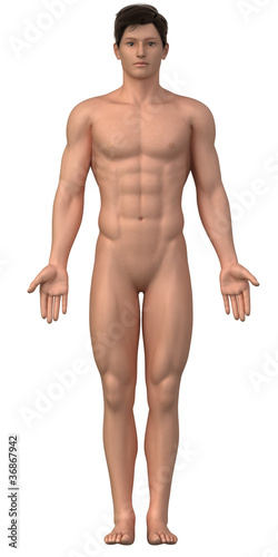 poster of Naked man in anatomical position isolated