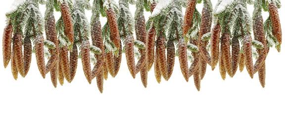 wald flora