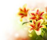 Lily Flowers border design. Summer Flowers