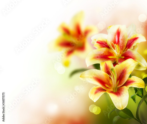 Lily Flowers border design. Summer Flowers