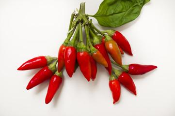 mazzetto di peperoncini rossi