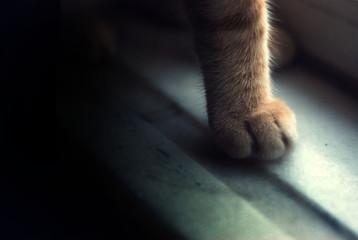 Senses of a cat