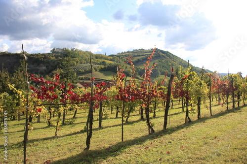 vigne d'autunno