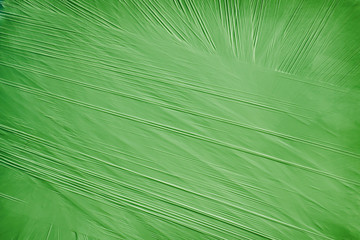 Green background from a packing material