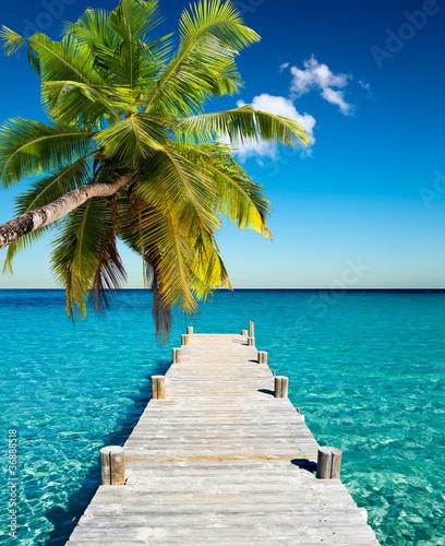 plage vacances cocotier - 36888518