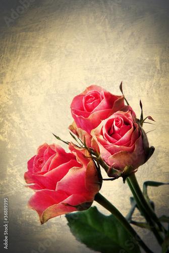 Rose selvatiche  -  vintage postcard