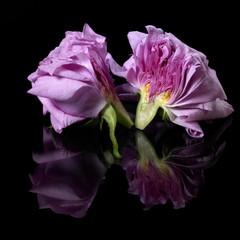 halved pink rose