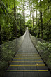 Tropical Forest Suspension Bridge