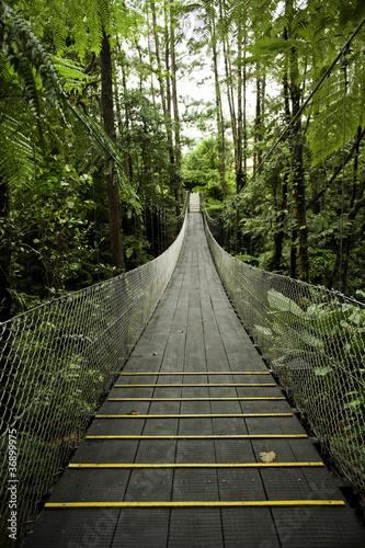 Tropical Forest Suspension Bridge