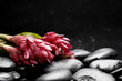 still life with branch tropical red flower on pebble