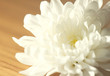 White chrysanthemum on table
