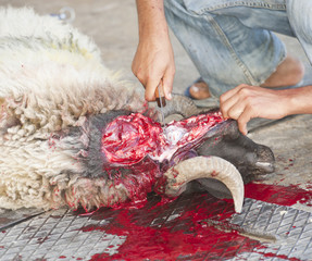 Sheep being traditionally killed for the Eid festival