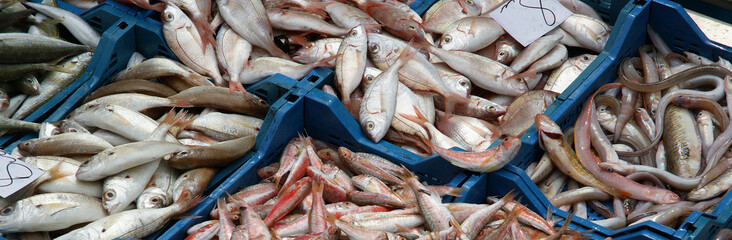 Fresh fish laid out at a market