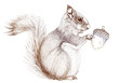 squirrel with acorn, vector