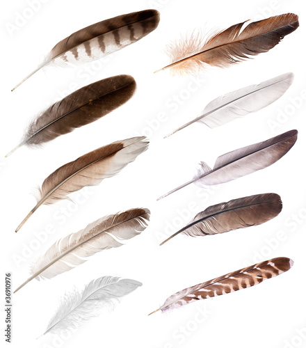 Eagle ten feathers from different birds