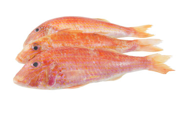 Red mullet fish isolated on white background