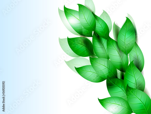 Fotobehang Bloemdessin green leaves. vector illustration