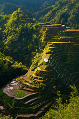 Rice field in Philippines