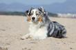 chien allongé sur le sable en vacances