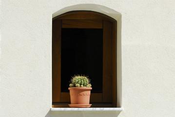 Finestra legno con arco, muro bianco, pianta, fioriera