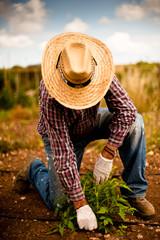 Agricultor plantando patatas