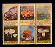 DPR KOREA, Various kinds of mushrooms,  circa 1986