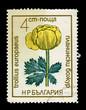 Bulgaria showing trollius europaeus, circa 1968
